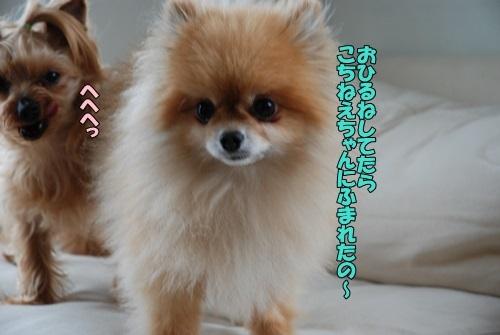 DSC_00020507.jpg