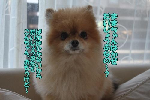 IMG_00570217.jpg