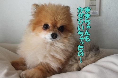 IMG_00610219.jpg