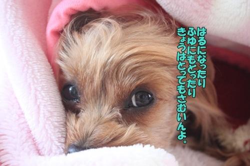 IMG_00850221.jpg