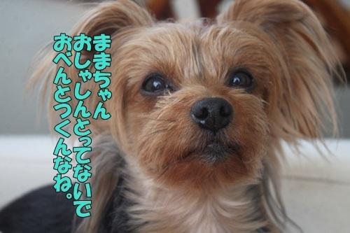 IMG_02010303.jpg