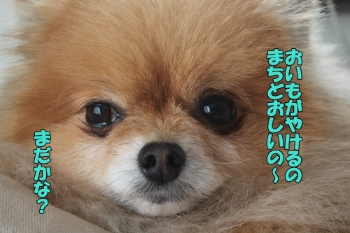 IMG_02780310.jpg