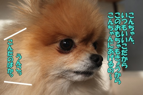 IMG_04130320.jpg