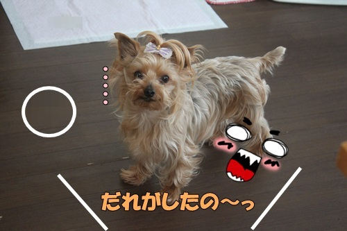IMG_04950325.jpg
