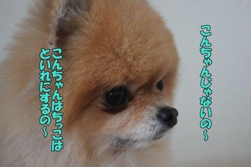 IMG_05010325.jpg