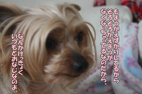 IMG_07060406.jpg