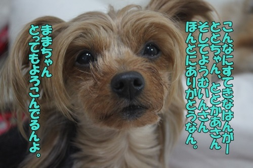IMG_07920411.jpg