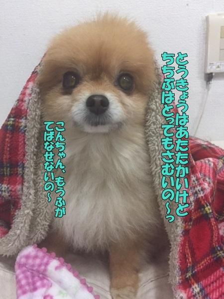 image10228.jpg