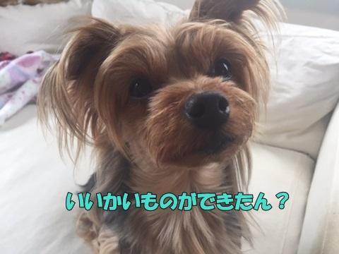 image50416.jpg