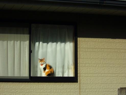 通りすがりに見かけた猫(766)