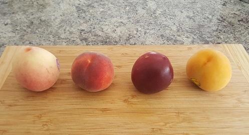 桃の季節2017