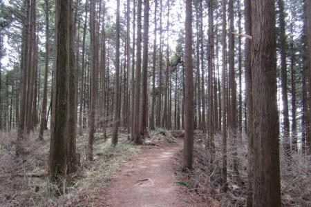 170304御岳~日の出山 (11)s