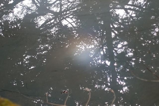 3 伽耶院 ヒカリモ (9)