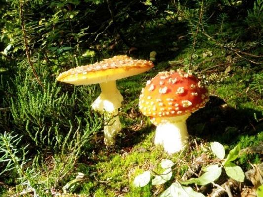 mushroom168468.jpg