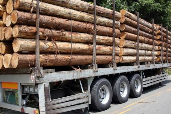 wood124564.jpg
