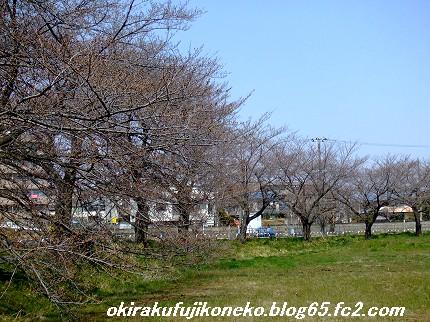 0328桜1