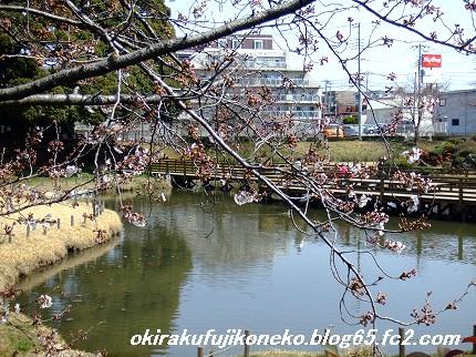 0328桜7