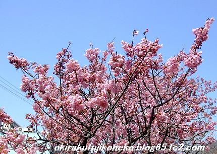 0328桜8