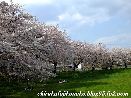 0413桜2