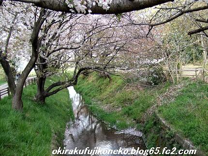 0413桜3