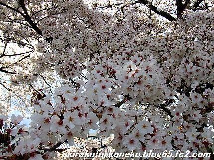 0413桜9