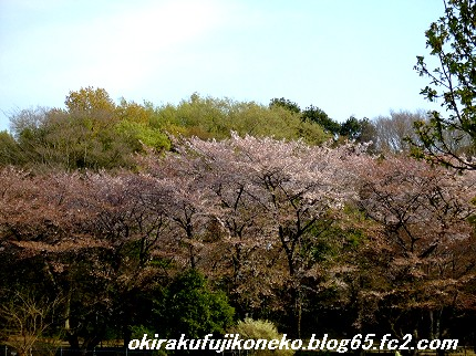 0414桜3