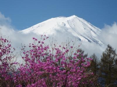 富士とミツバツツジ