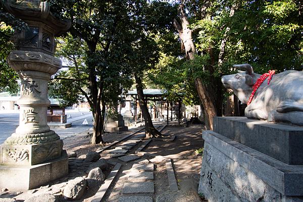 川原神社天神社の牛