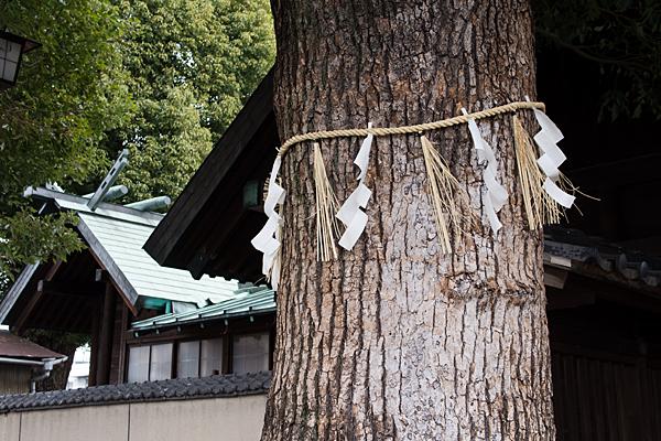 神明社八幡社ご神木