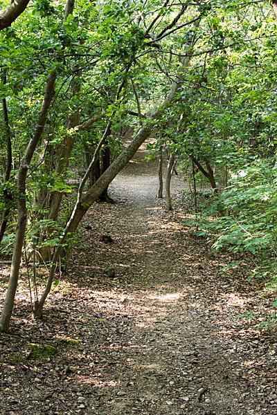 天白公園雑木林と散策路
