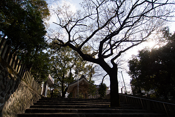 新栄白山神社北階段