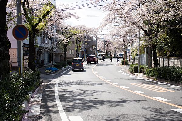 大森・金城学院駅北の桜並木