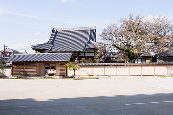 覚成寺終わりの桜