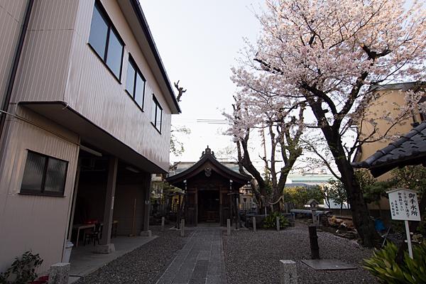 古傳馬神社拝殿と桜