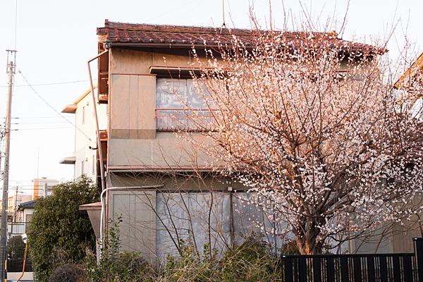 空き家と梅