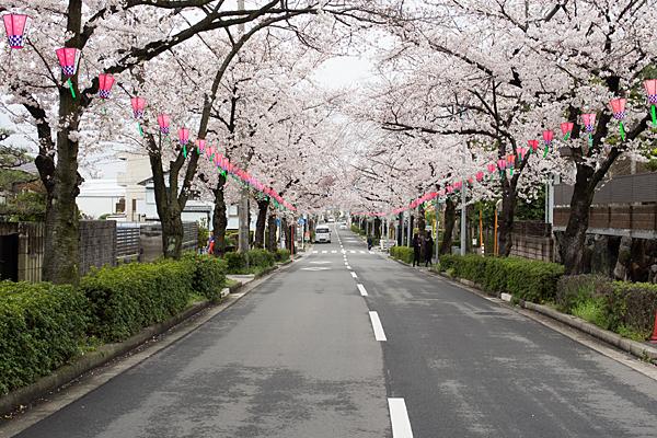 森孝八劔神社前の桜並木