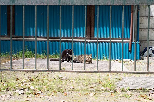 椿神明社猫たち