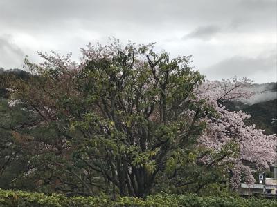 東山桜_convert_20170411200429