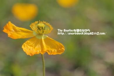 IMG_2017_03_20_9999_94.jpg