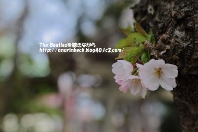 IMG_2017_04_10_9999_18.jpg