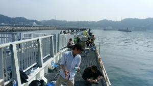 豊浜釣り2