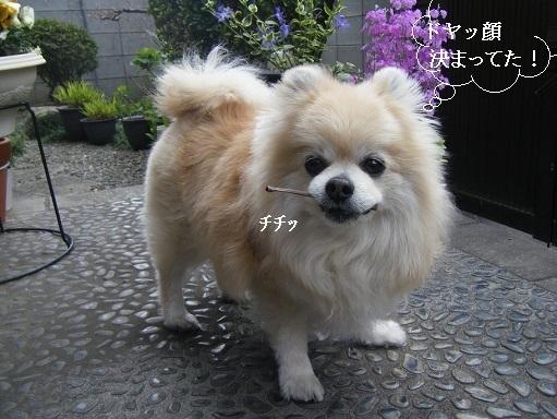 DSCF5377.jpg