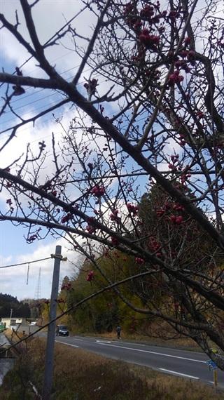 2017_03_30_三多気の桜_003_2017_04_09