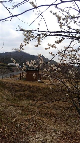 2017_03_30_三多気の桜_041_2017_04_16