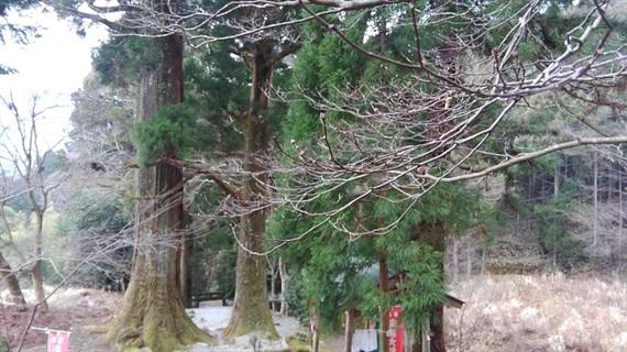 2017_03_30_三多気の桜_167_2017_04_23
