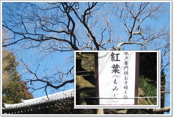 日本寺で2