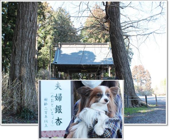 日本寺で4