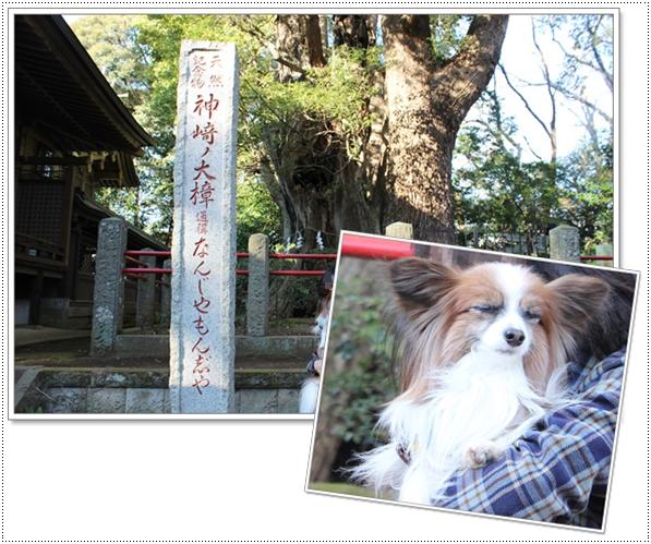 神崎神社で1