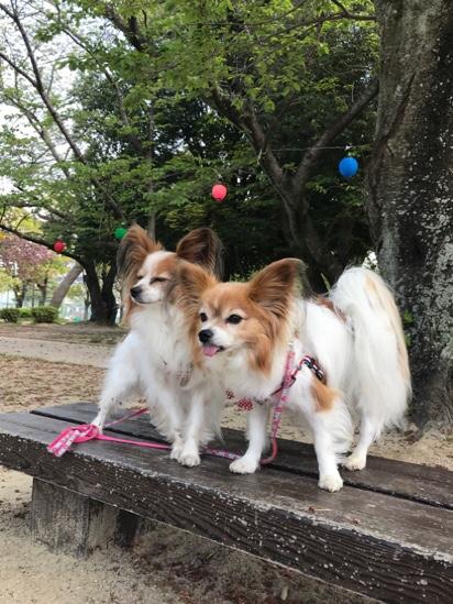 fc2blog_201704291946170b5.jpg