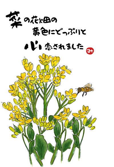 80 菜の花とみつばちss